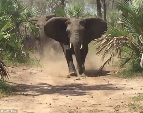 Zimbabwean soldier nabbed for jumbo poaching