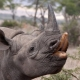 Rhino poaching syndicate smashed