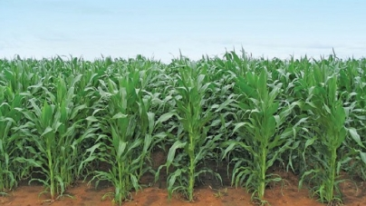 Rains bring glimmer hope to distressed SADC agro sector
