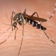 Zimbabwe malaria deaths could be coronavirus cases
