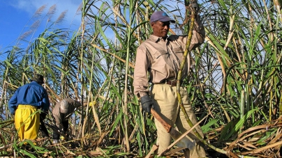 SA black sugar cane farmers form association