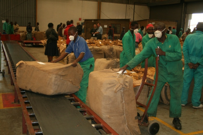 Child labour exposed at Zimbabwe tobacco farms