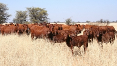 Chiredzi farmers under pressure to sell stock amid drought fears