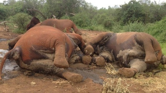 Govt probes into jumbo killings