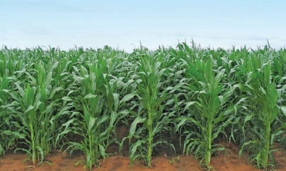 Zimbabwe's famed farming sector rebounds