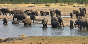 Zimbabwe launches fund to keep tourism afloat