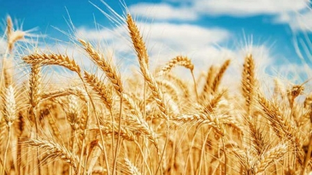 Zim's agro-revival rests on mixed weather fortunes