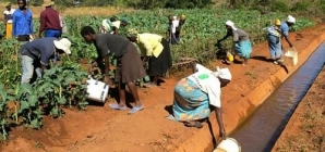 UNDP revives irrigation schemes in Masvingo