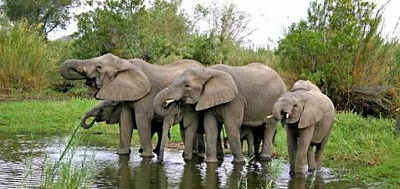 Tech roped in to save African jumbos from scarcity