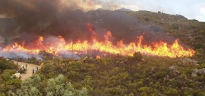 Counting the losses from the ravaging Cape fires