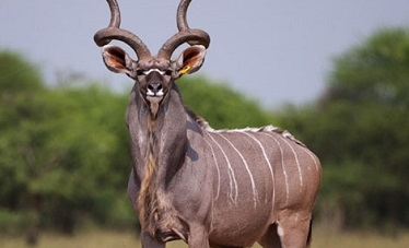 Poaching escalates at local game parks